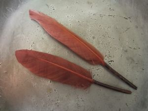 Feather red-brown